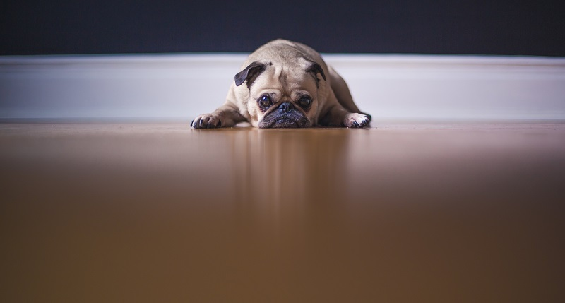 Best Hardwood Flooring For Pets